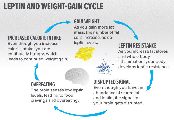 leptin and weight